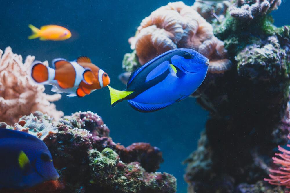 タンパク質 魚